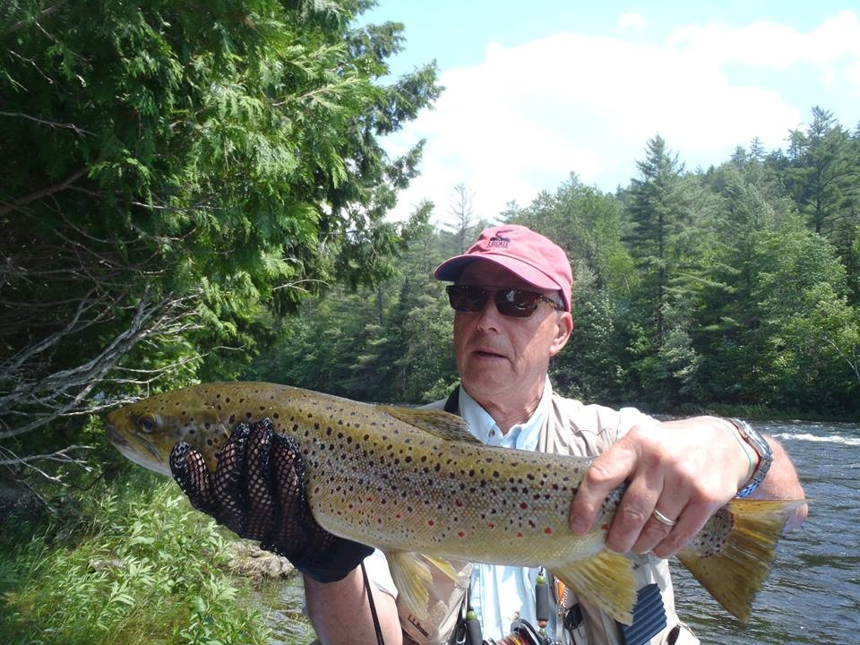 Kennebec River Brown Trout